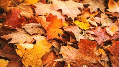 october half term - OCTOBER HALF TERM